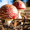 Mushrooms in the Autumn Sun