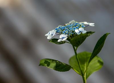 June Flowers 003