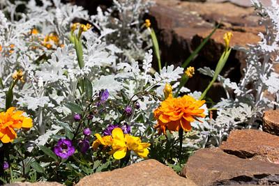 spring flowers 067