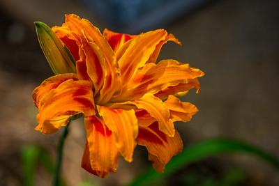 June Flowers 010