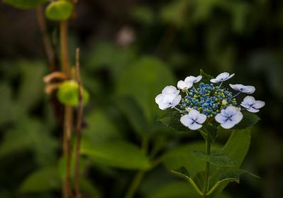 June Flowers 001