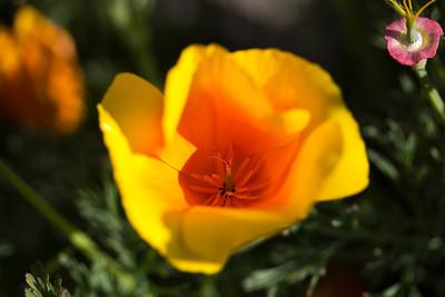 Spring 2013 (1)