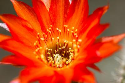June Flowers 033
