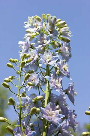 spring flowers 028