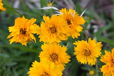 flowers 038