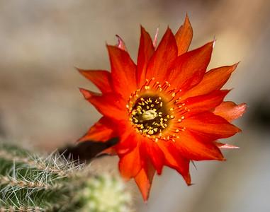June Flowers 019