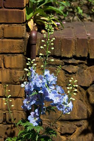 spring flowers 022