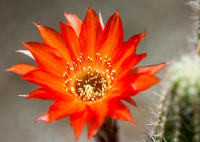 June Flowers 035