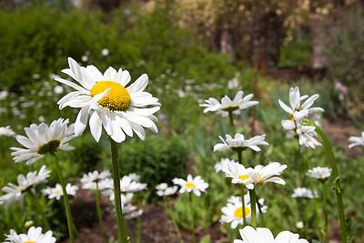 spring flowers 007