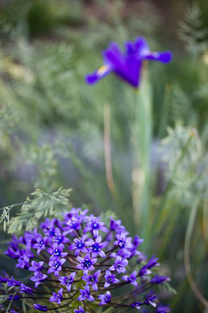 spring flowers 077