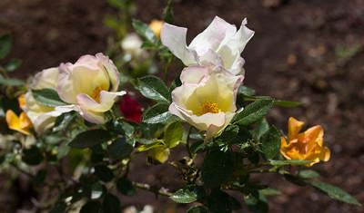 spring flowers 011
