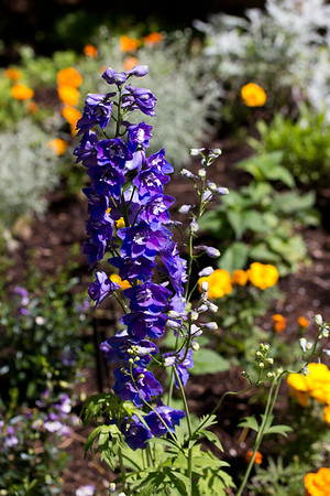 spring flowers 060