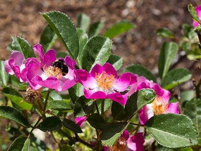 spring flowers 019
