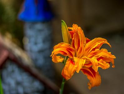 June Flowers 017