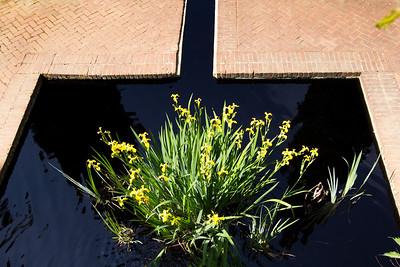 spring flowers 044