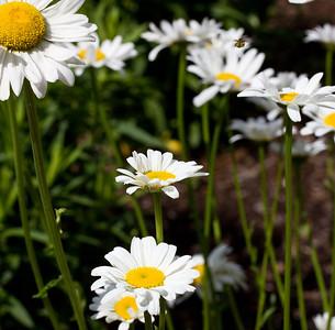 spring flowers 010