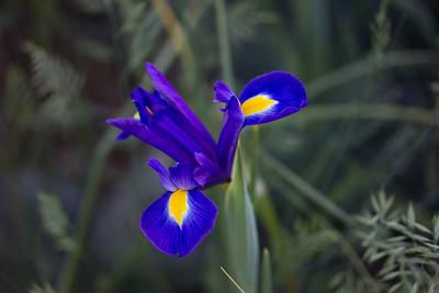 spring flowers 075