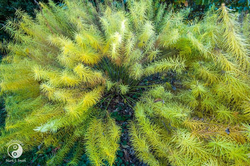 Morris Arboratum