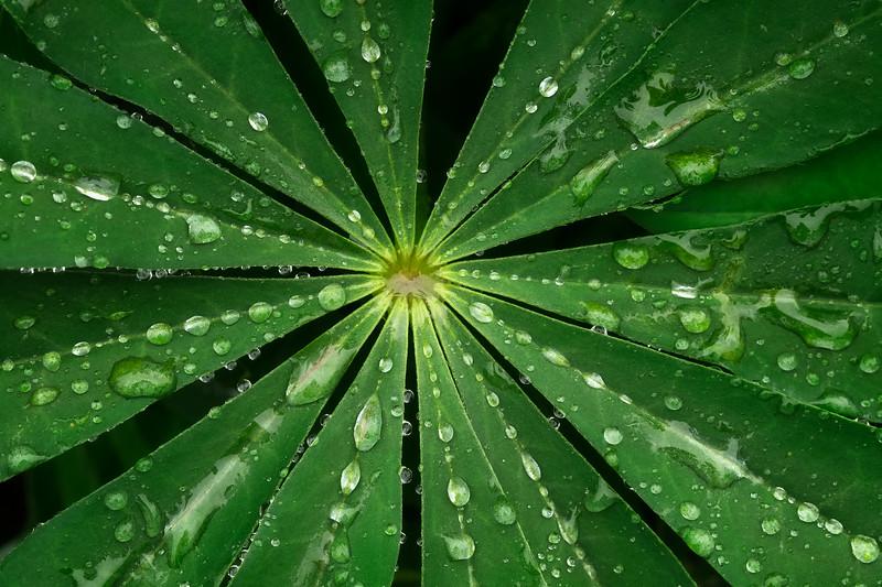 Radial Drops