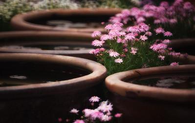 Spring flowers 2011