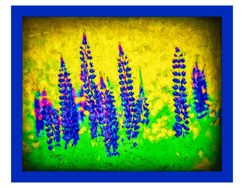 Lupins #4