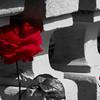 Roses at Villa Carlotta