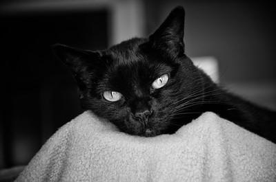 Black Cat 3810