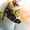Bee 3 1372