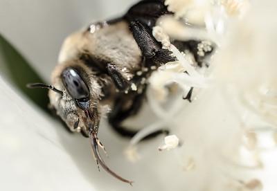 Bee 4 1399