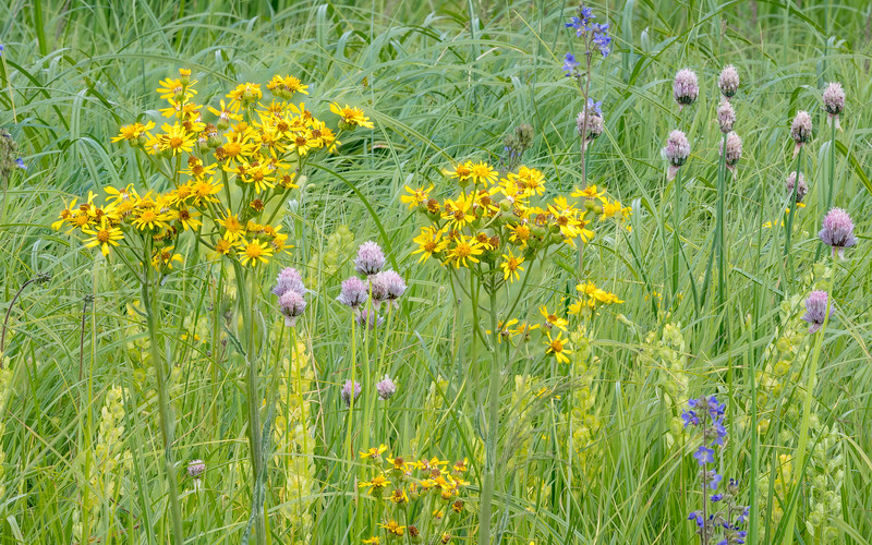 Mixed Palette of Wildflowers Near Banks of Big Hole River