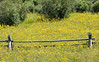 Split-Rail Fence and Wildflowers