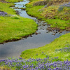 Purple Lupine and Seasonal Winding Stream