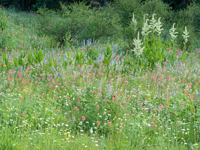 Mixed Medley of Colorful Wildflowers on Round Lake Trail