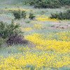 Meandering Field of Wildflowers