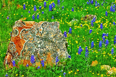 Granite and Wildflowers on the Willow City Loop Near Fredericksburg, TX
