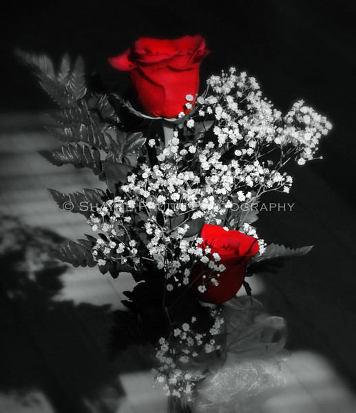 Roses in Color and Black & White