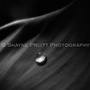 Water Droplet on a Plant Leaf