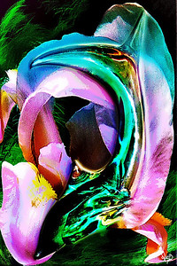 Dolphin Iris