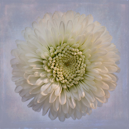 White Textured Flower