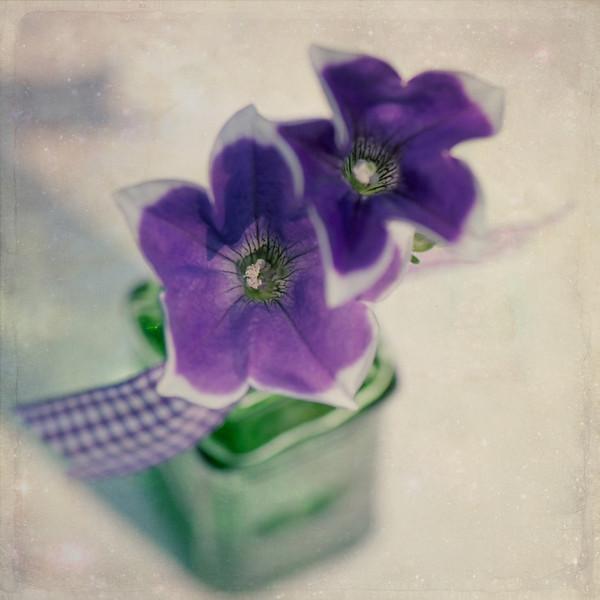 Pretty Purple Petunias
