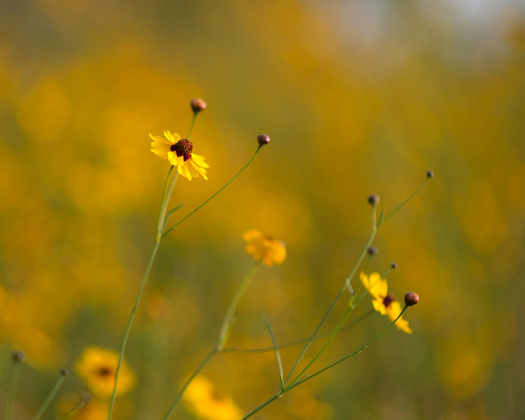 Wildflower Bokeh