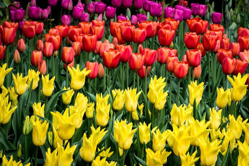 Tulip Layers