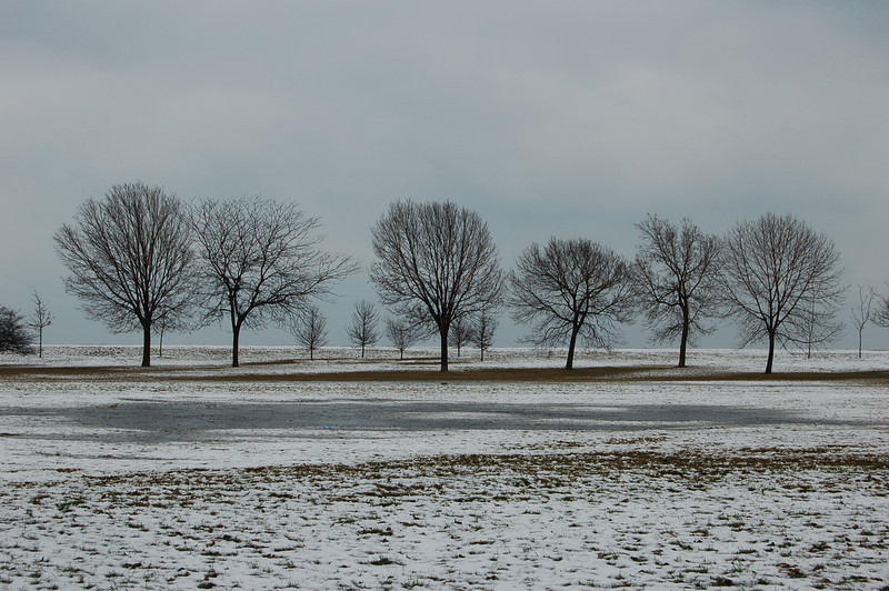 68 - Icy Trees, Lake Shore Drive, Chicago