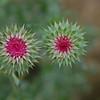 103 - Flowers, Estes Park, CO