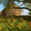 Sunflowers at the barn - Impressionistic
