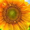 Tangerini's Flower