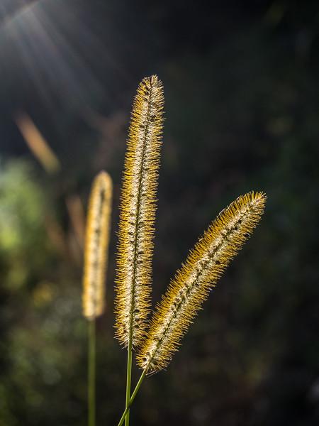 Rays of Grain