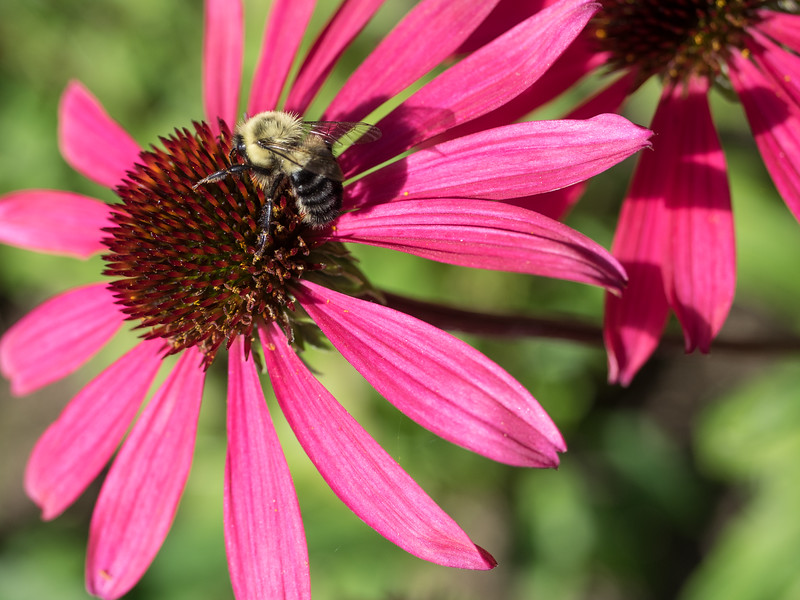 Pink Pollination