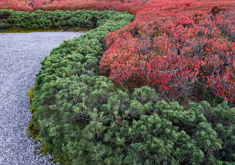 Garden Curves, Takayama Japan