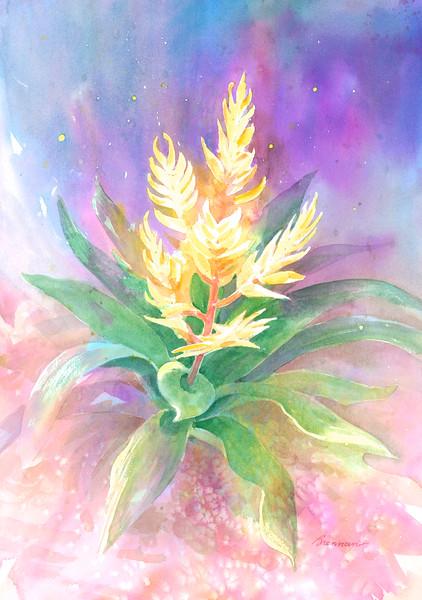 Vriesea Bromeliad